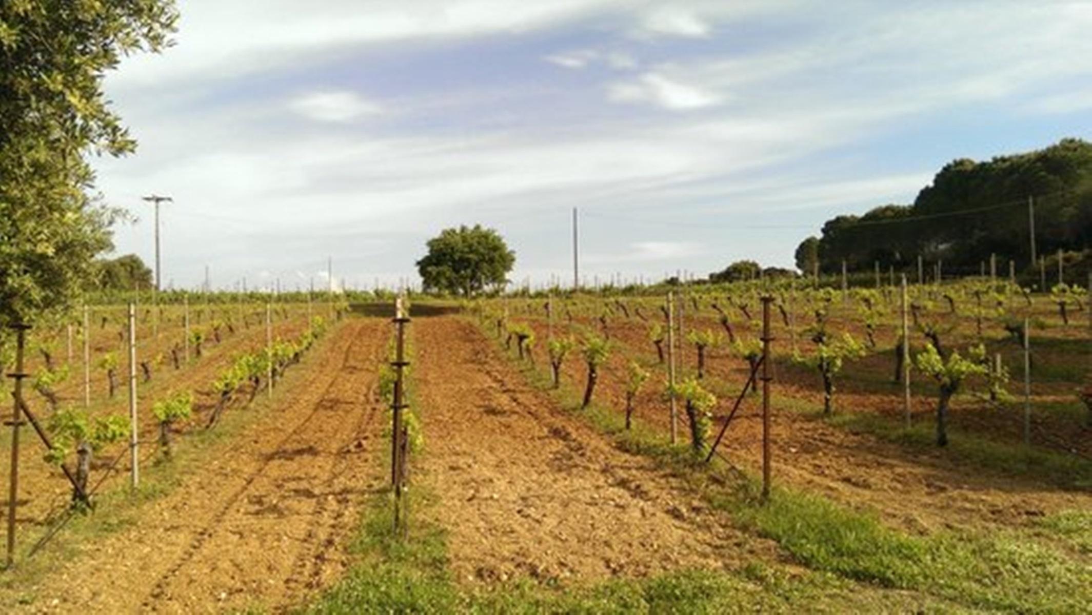 Gentilini-winery